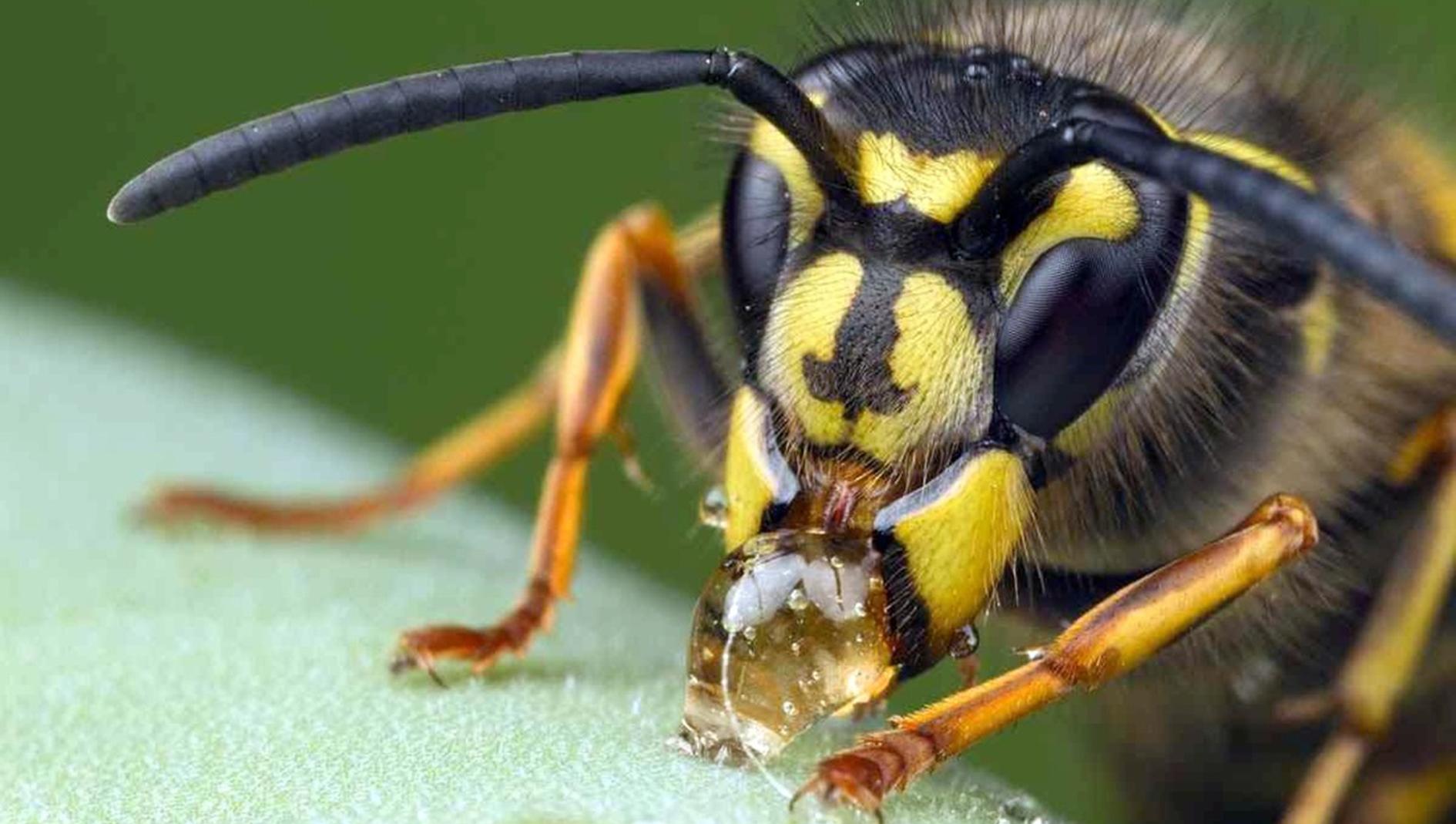 Méhfullánk krém